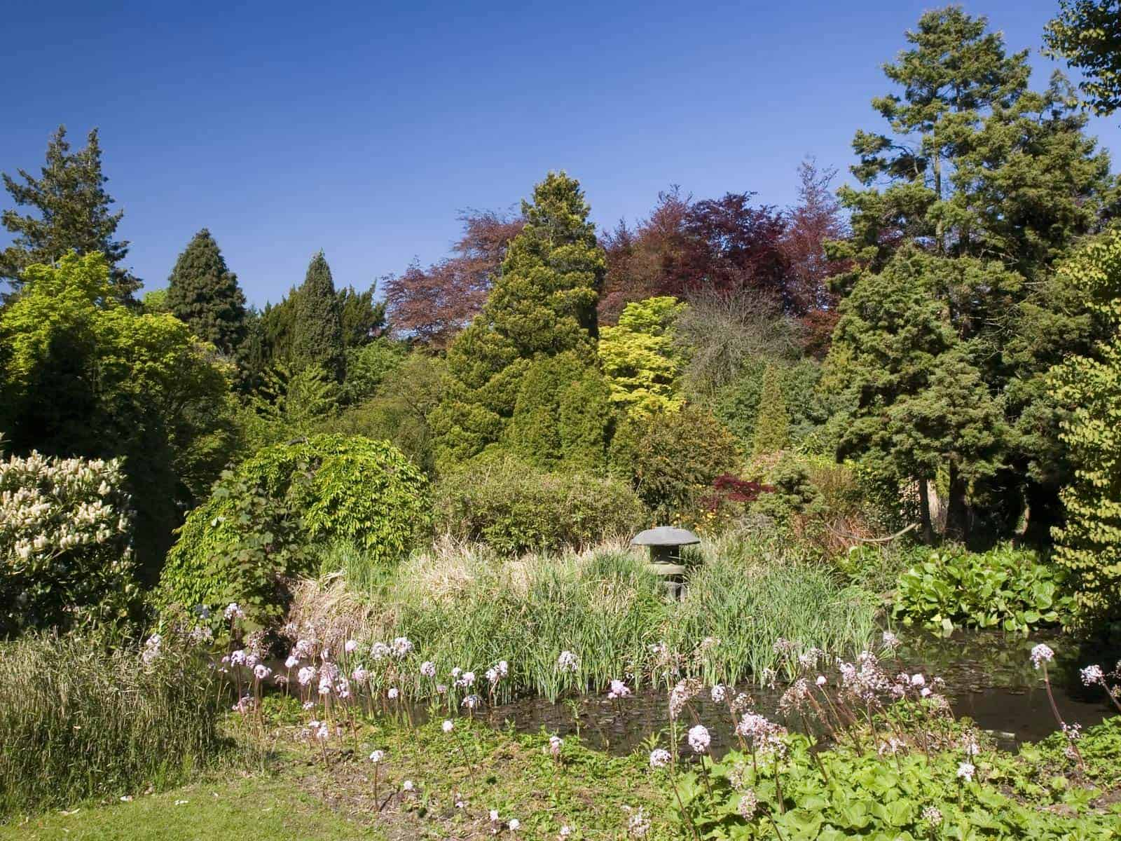 USE TREES AND SHRUBS TO CREATE AN ALLYEAR DESIGN FOR YOUR GARDEN
