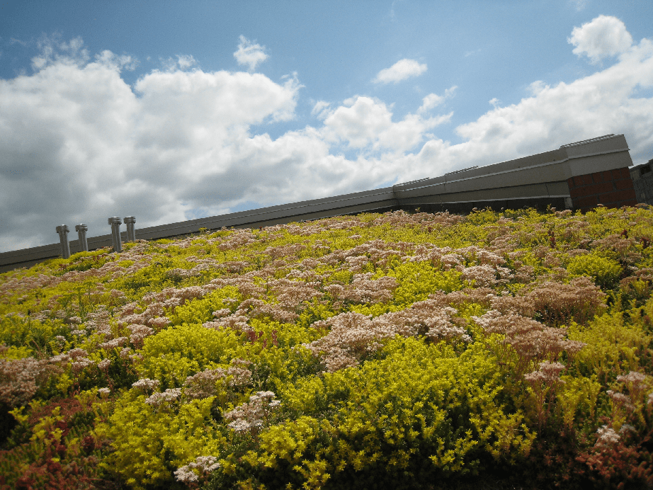 It Could Be Time To Rethink The Species Chosen For Green Roofs, According  To The Results Of New Research Carried Out With Funding From The Royal ...