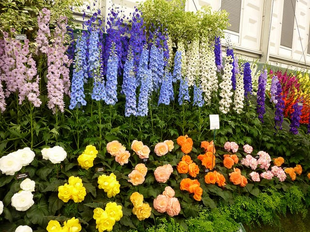 Record breaking number of top awards at centenary rhs chelsea - Chelsea flower show gold medals ...