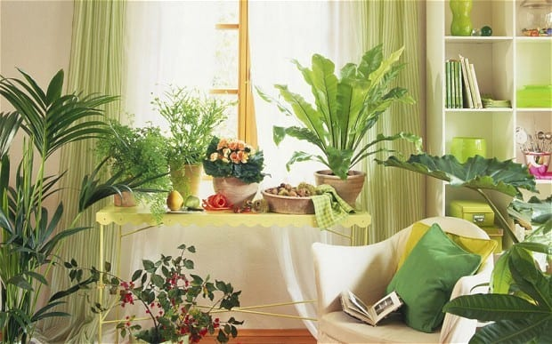 Indoor Gardening Many Plants Thrive Inside The House Photo Alamy