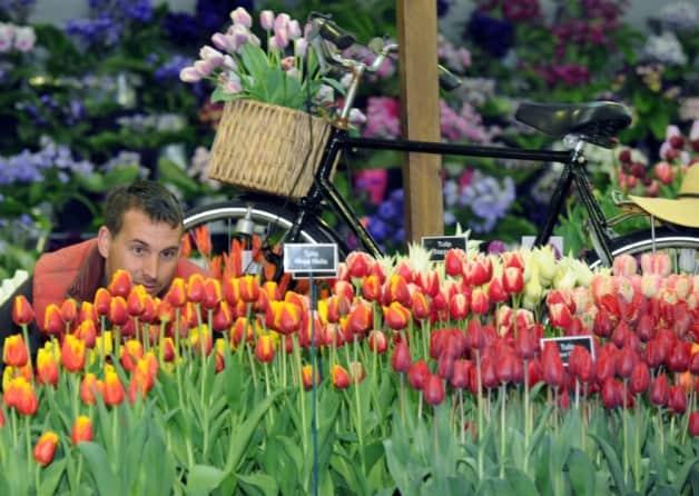 Knaresborough home for tour de france garden pro for Garden design harrogate