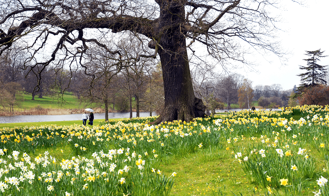 Countdown to capability brown 300th birthday celebrations for Capability brown garden designs