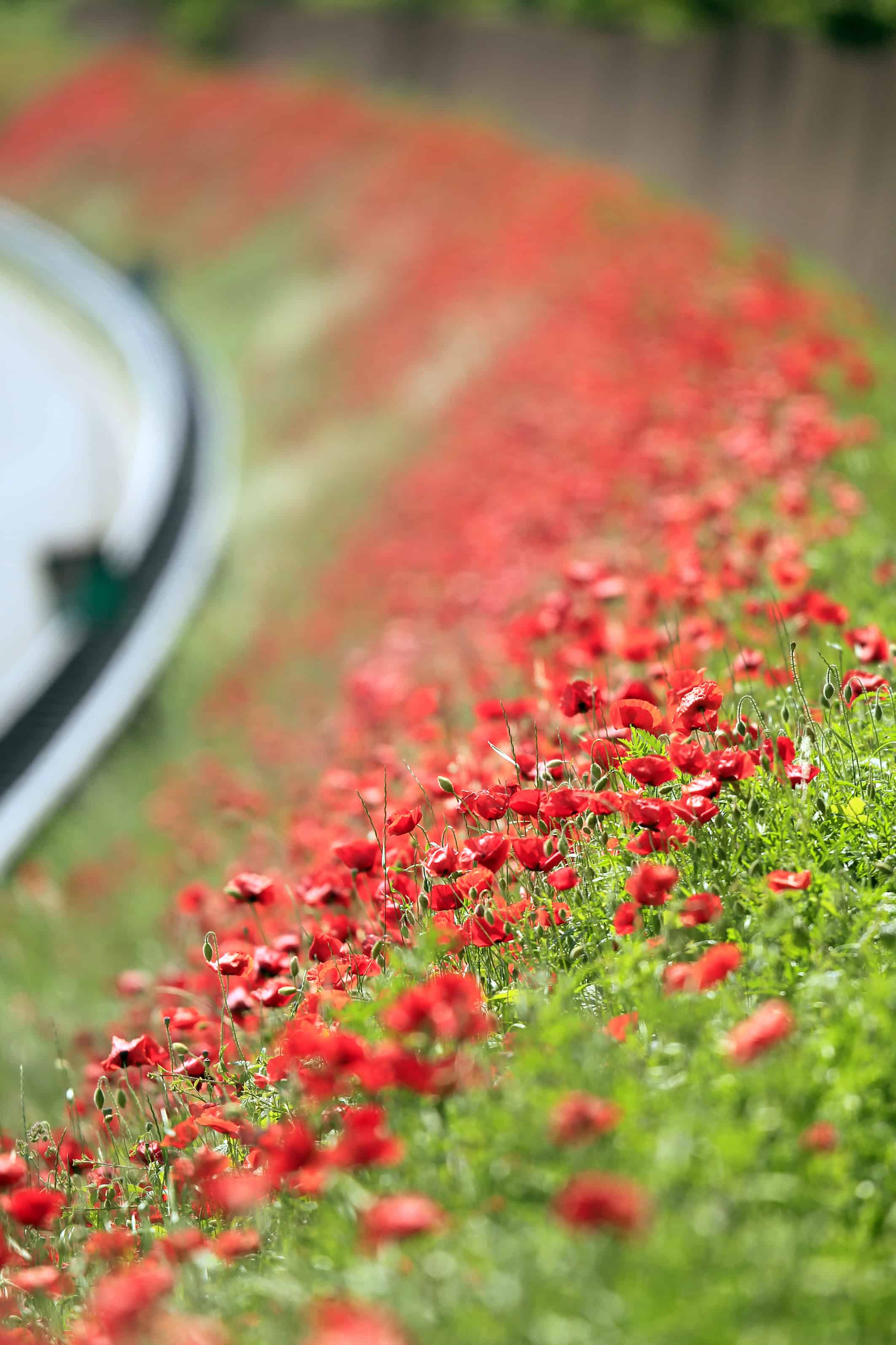 Two New Poppy Mixtures In Memory Of Soldiers Of World War One