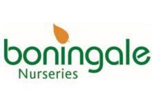 Boningale