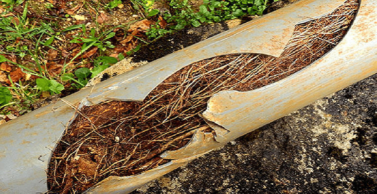Ukdn Waterflow Releases Report On Tree Root Growth Impact Urban Drainage