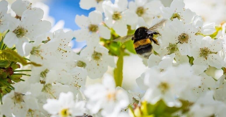 Um estudo recente mostrou uma queda enorme no número de insetos polinizadores em todo o Reino Unido desde os anos 80. Foto: The Independent.